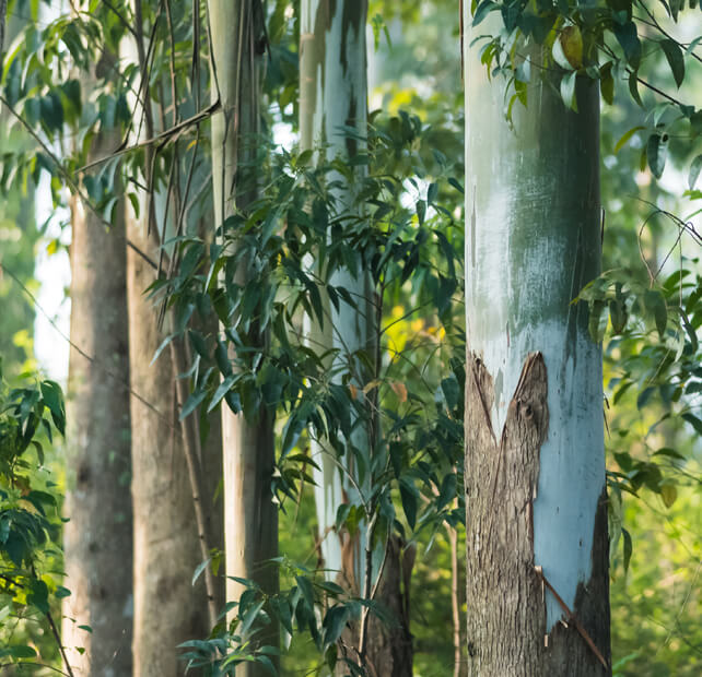 tencel eucalyptus