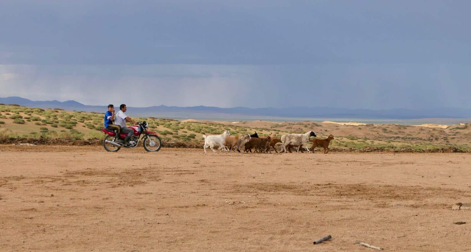 Nomads betternotstop Mongolia steppe motorbike herding