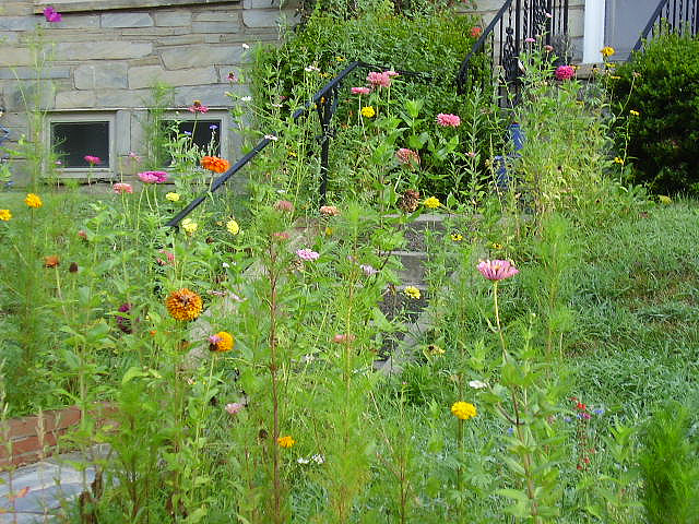 overgrownwildflowersyard