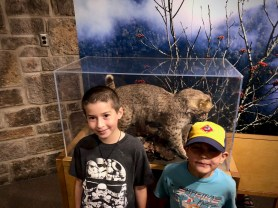 My two cubs with a real bobcat