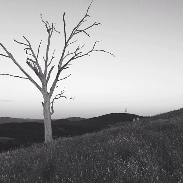 #canberra Telstra tower from Mt Painter