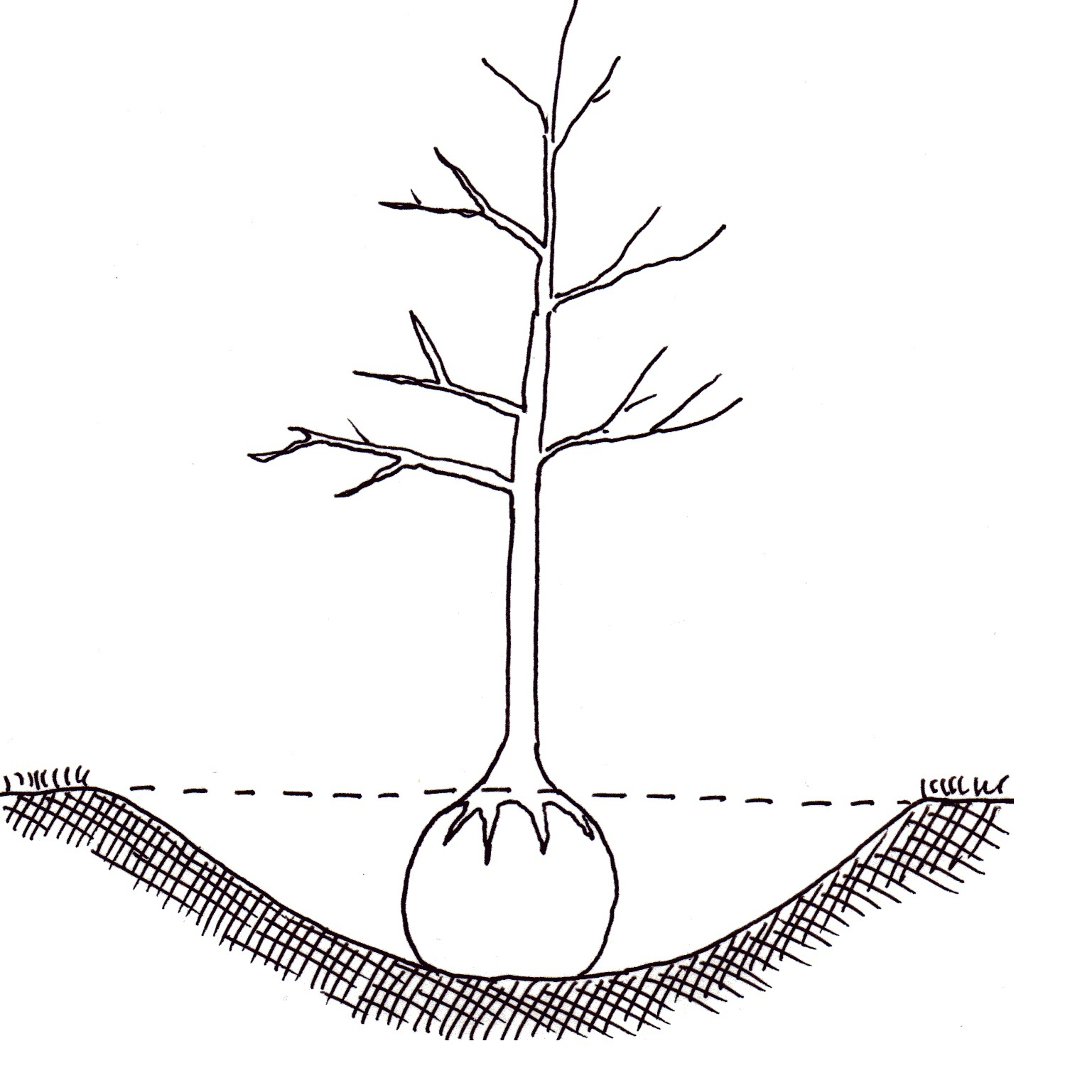 Tree Root System Diagram Pictures To Pin