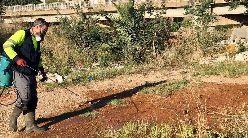 L'Ajuntament intensifica les accions contra el mosquit tigre
