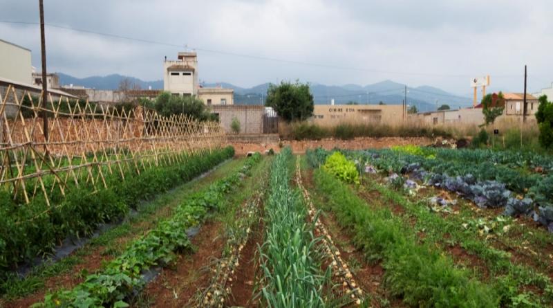 Novessendes presenta un Sistema Participatiu de Garantia (SPG) per a potenciar l'agroecologia
