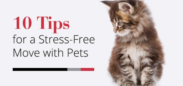 10 Tips for a Stress-Free Move with Pets