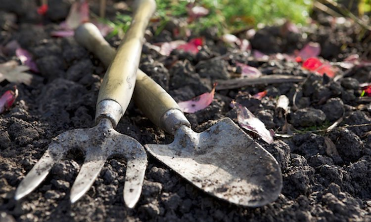 Agents Answer: Where is the Best Place to Find Gardening Supplies?