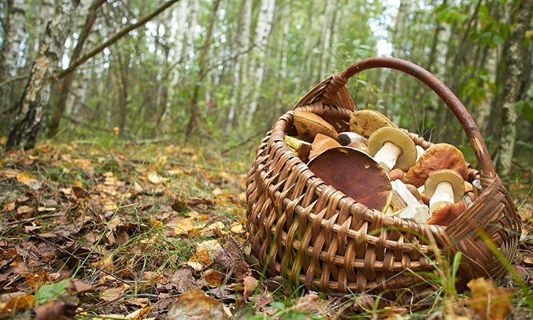 Everything You Need to Know about Mushroom Foraging in Asheville