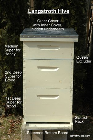 Parts of a Beehive  Beginner Beekeeper's Guide  Beekeeping  BEVERLY BEES