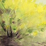 Signs of Spring:  New Forsythia and Magnolia Prints