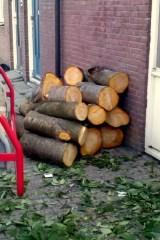 Gekapte boom, Gronsvelderf
