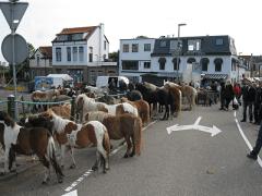 Paardenmarkt Oud IJsselmonde 25 juni a.s.