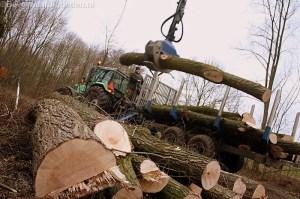 Forse bomenkap achter Geullestraat