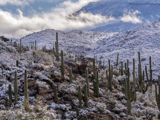 arizona aride sous la neige