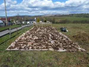 Cardboard layed out and weighted down with farmyard manure donated by one of our parishioners.