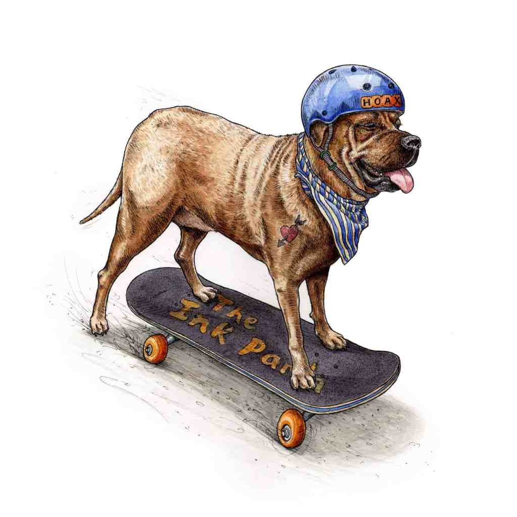 An original picture of a bullmastiff with a tattoo, blue helmet and striped dog bandana skateboarding on a white background