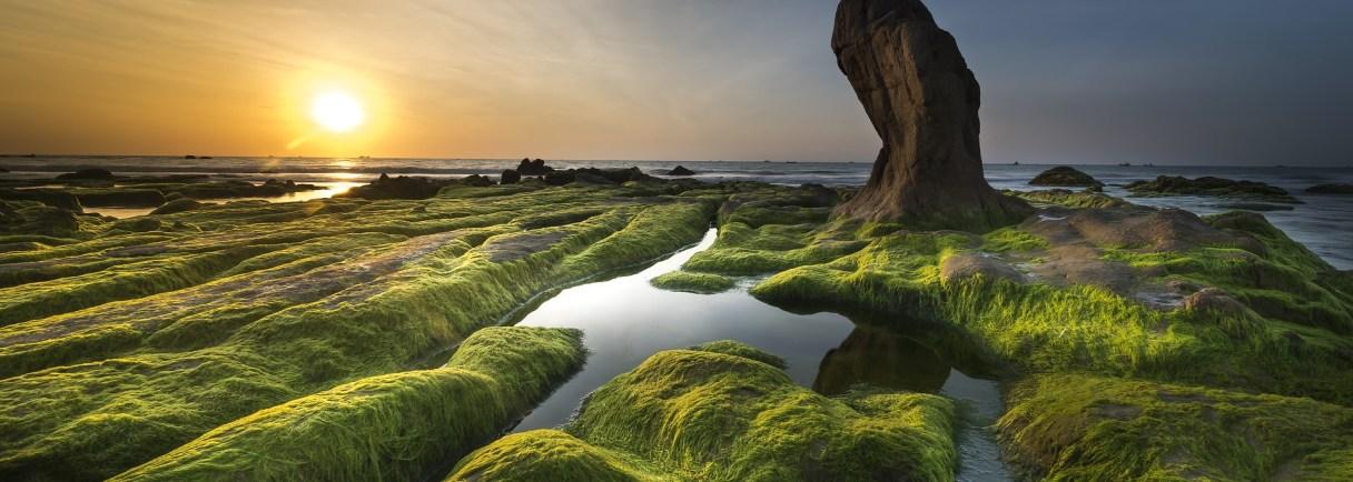 Grüne Algenlandschaft