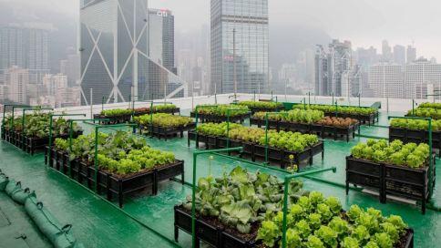 Anbau von Salat auf einem Dach in der Stadt