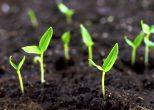 Kleine Pflanzen wachsen