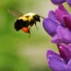 Blog - Hoe observatiekracht je helpt in het beoefenen van mindfulness