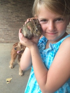 Finding Wild Bunnies In the Yard