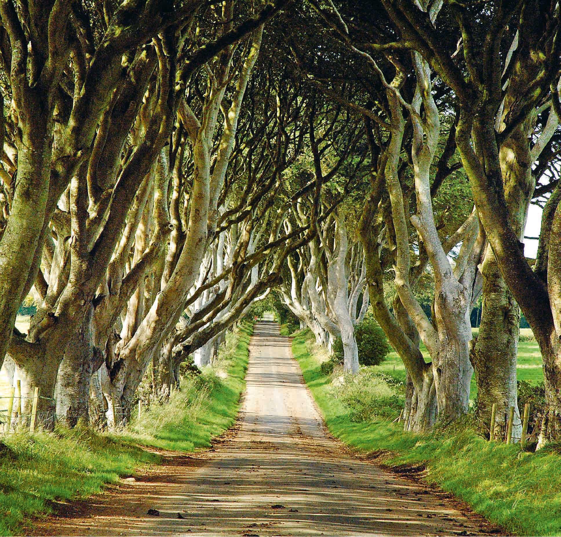 Tree-Topping Beauty  Beyond Magazine-9275