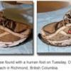 shoe_8-300x127