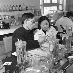 This photo released by Xinhua News Agency on Monday Oct. 5, 2015 and taken in the 1950s, shows Tu Youyou, right, a pharmacologist with the China Academy of Chinese Medical Sciences in Beijing, working with professor Lou Zhicen to study traditional Chinese medicine. Three scientists from Ireland, Japan and China won the 2015 Nobel Prize in medicine on Monday, Oct. 2015 for discovering drugs against malaria and other parasitic diseases that affect hundreds of millions of people every year. Tu of China was awarded the prize for discovering artemisinin, a drug that has helped significantly reduce the mortality rates of malaria patients. (Xinhua via AP) NO SALES