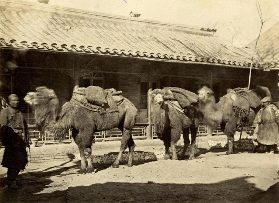 Thomas Child, No. 195 'Parade of Camels'