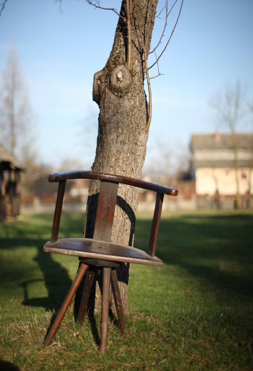 bi-scaun-la-copac-cernat-01-m