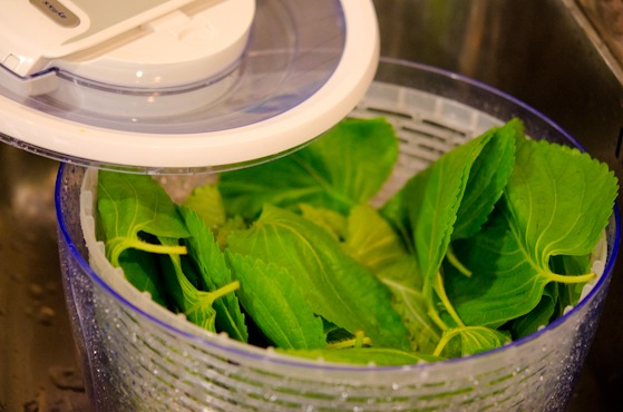 periila leaves with salad spinner