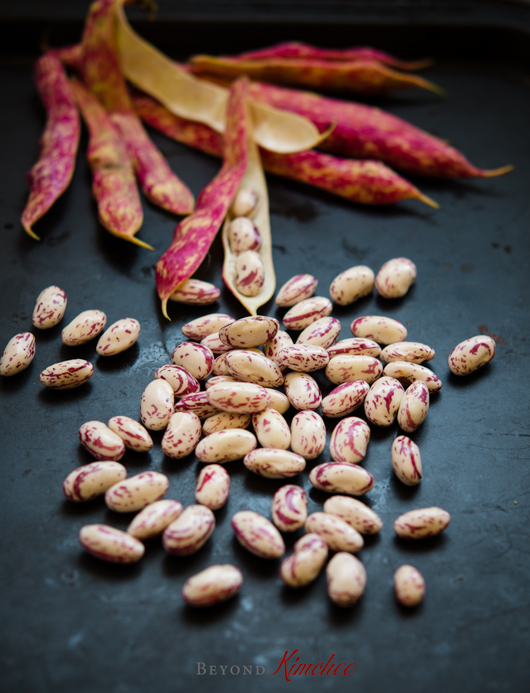 Fresh Pinto Beans