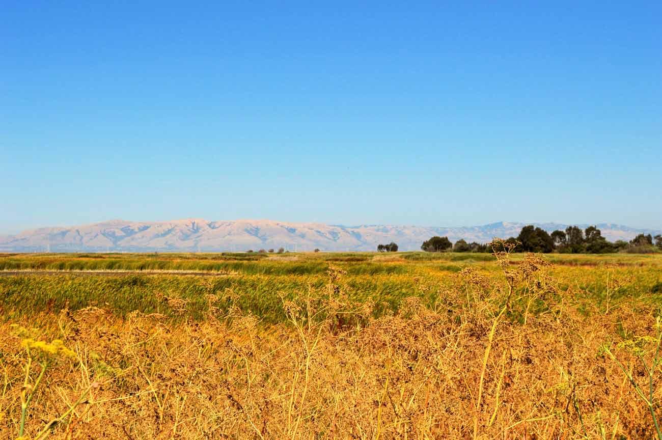 fields in Mountain View, California