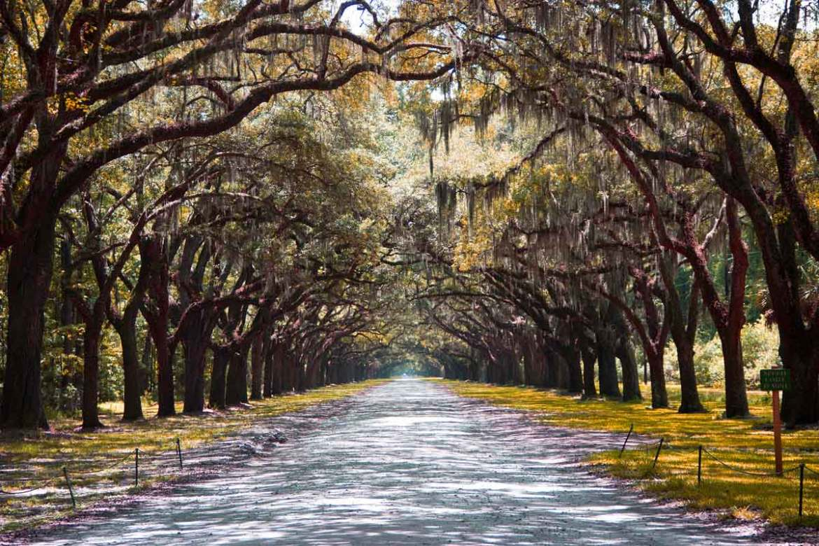 savannah-georgia-beautiful-trees