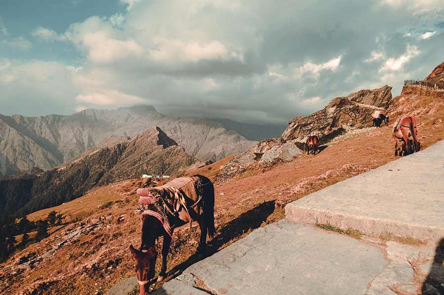 Himalayan-Trekking-India-(4)
