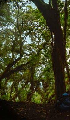 The-Acatenango-hike-second-half
