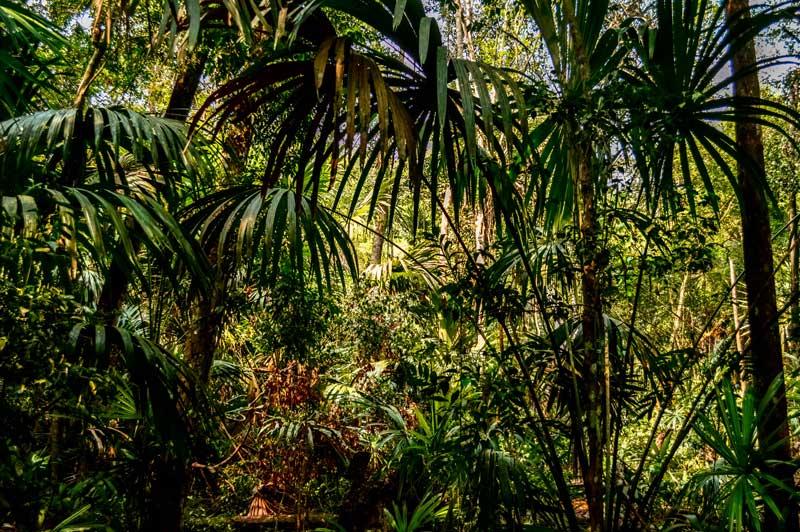 Tikal forest