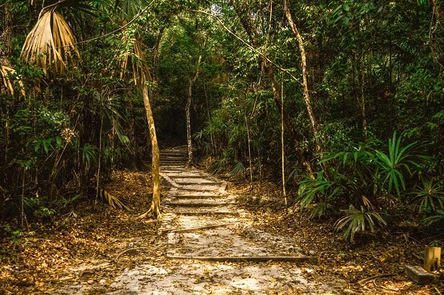 tikal-national-park-guatemala-(14)