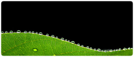 Moisture in photographic equipment can cause fungus to grow