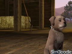 SimGoodie Previews Pets