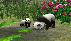 Pandas in Pets? Yes, Please!!!