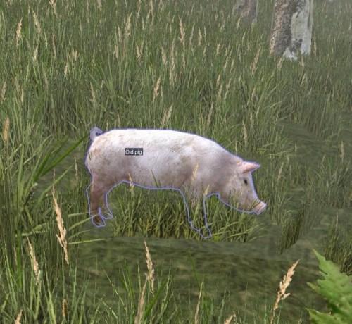 Found a pig