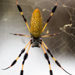 Be A Spider (4 Wise Moves for Entrepreneurs)