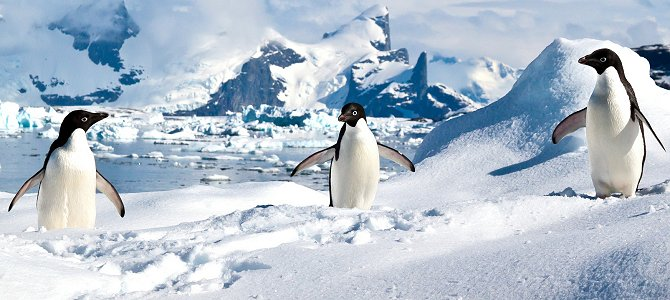 Penguins Have Plenty to Smile About!