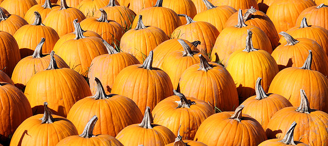 Pumpkin Spice Birds – It's a Real Thing!