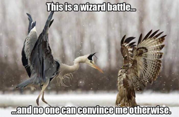 Bird Wizard Battle