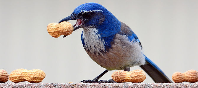 Birds Are Caching In on Hiding Food
