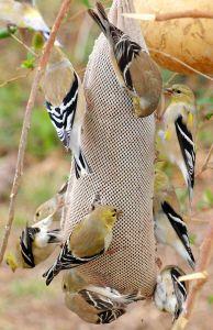 Feeding Frenzy - Photo by Frank Boston