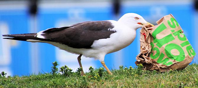 Birds and Cholesterol