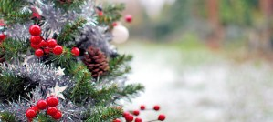 Outdoor Christmas Tree - Photo by Dineshraj Goomany