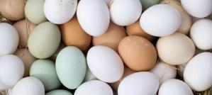 Farm Fresh Eggs - Photo by woodleywonderworks